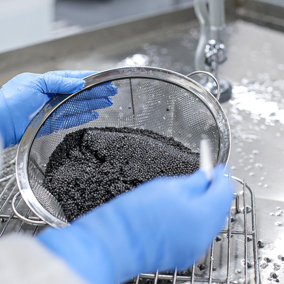 Caviar harvesting
