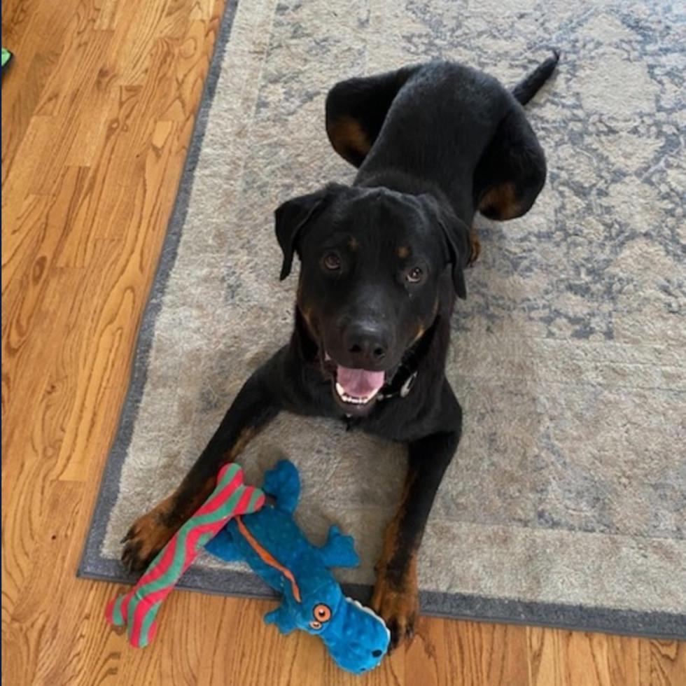 Adoptable dog Landon
