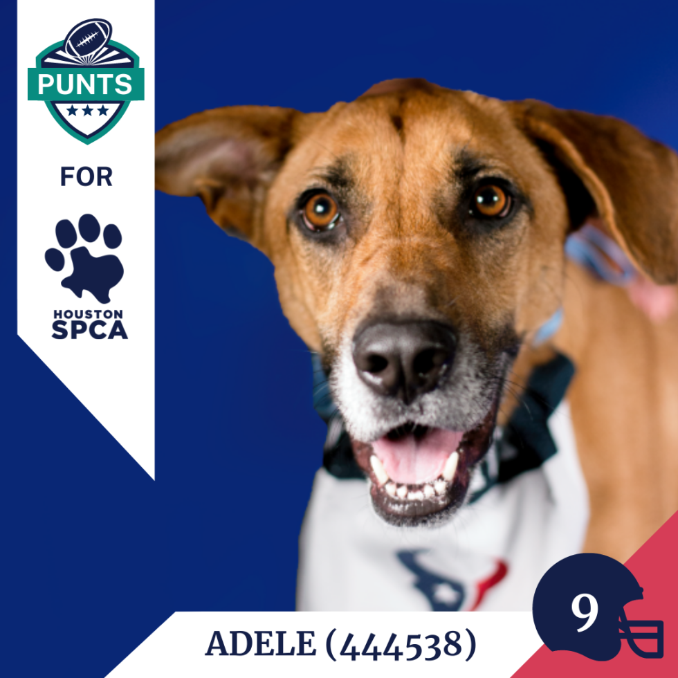 Punts for Pups player card