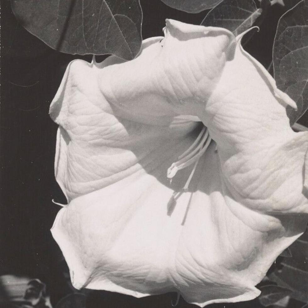 "Museum of Fine Arts, Houston presents ""Georgia O'Keeffe, Photographer"""