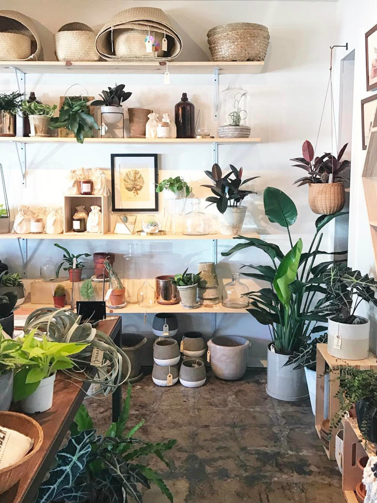 Magnificent Our Favorite Austin Shops For Hip And Healthy Houseplants Home Remodeling Inspirations Basidirectenergyitoicom