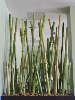 News_Mai's_bamboo