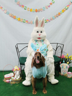 Rover Oaks Pet Resort presents Doggie Pictures with the Easter Bunny