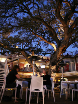 Austin photo: Places_Food_El Arbol_Exterior