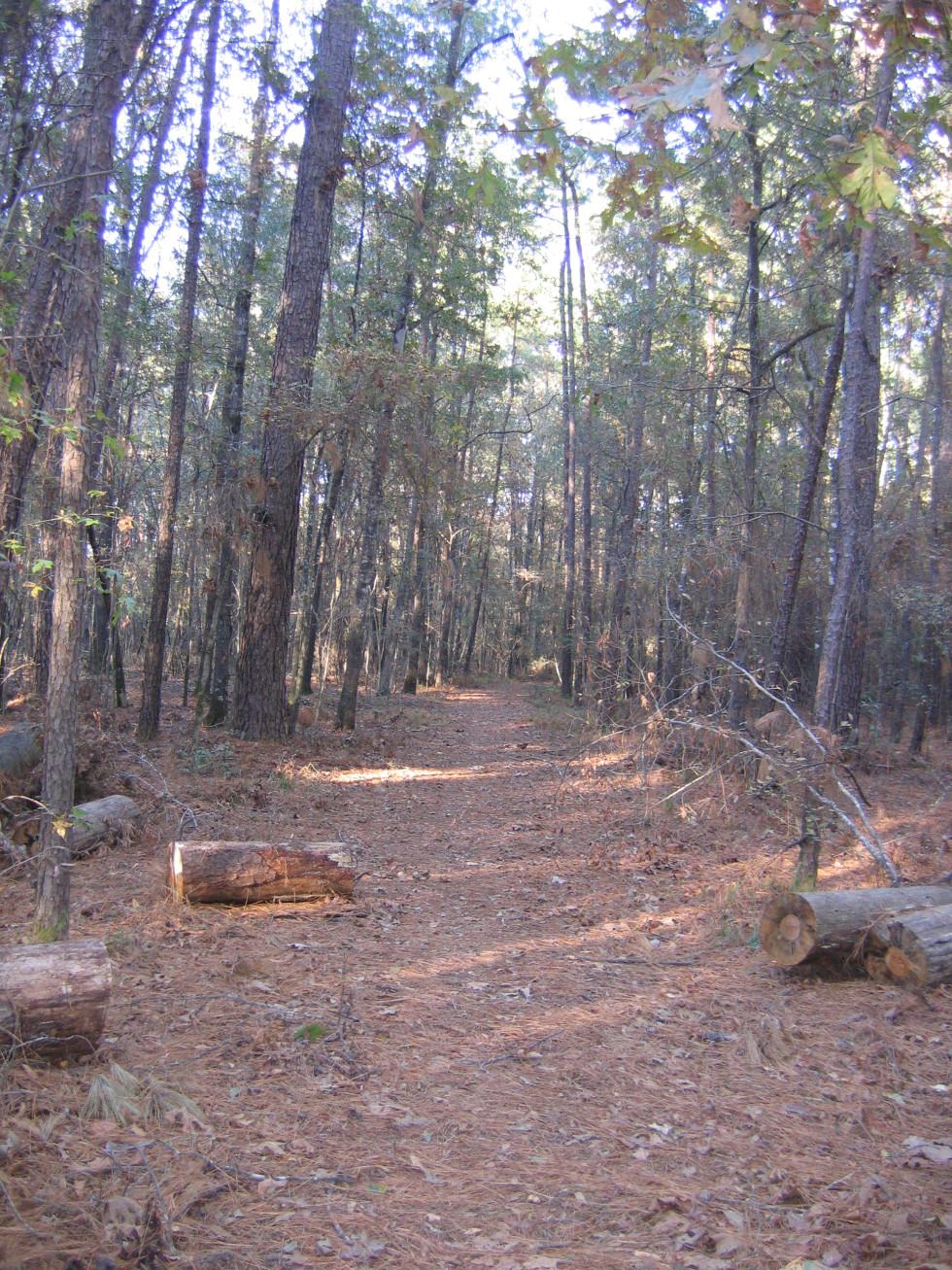 Lake Livingston hiking trail