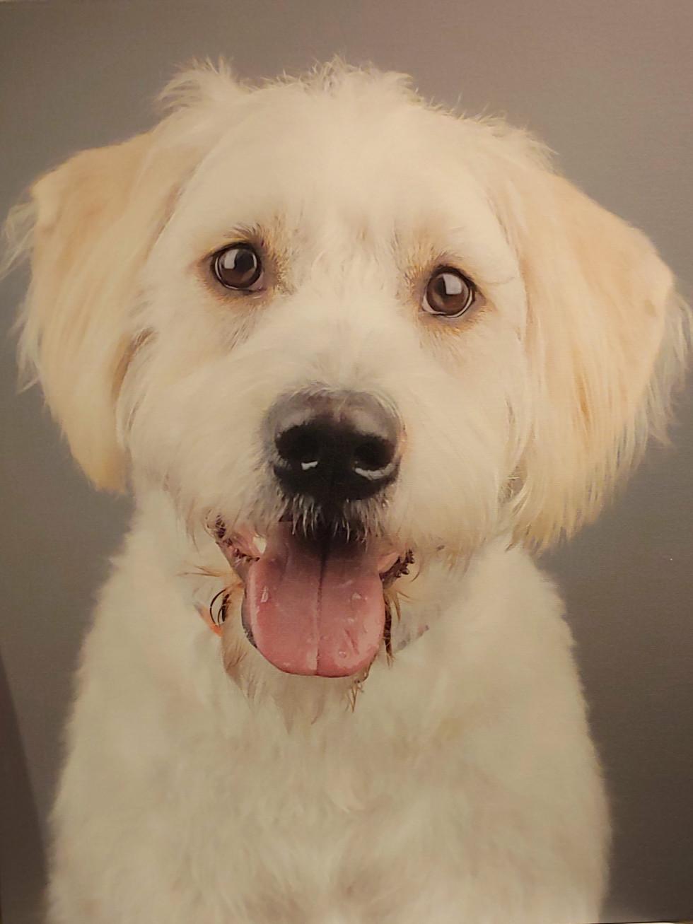 Ken Hoffman Sally puppy dog portrait