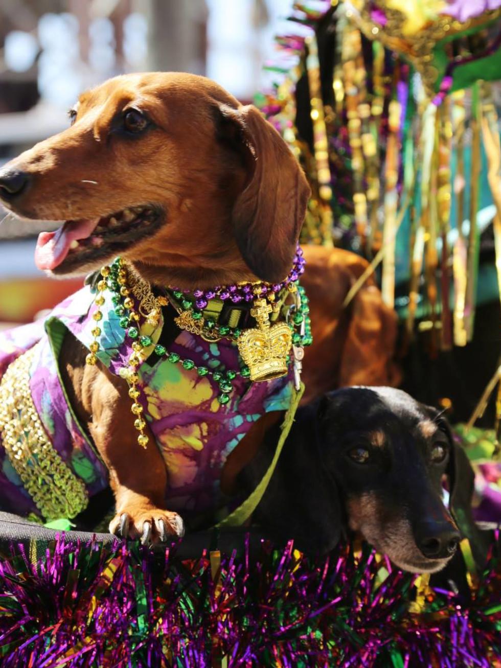 Mardi Gras Galveston Krewes of Barkus and Meoux Parade
