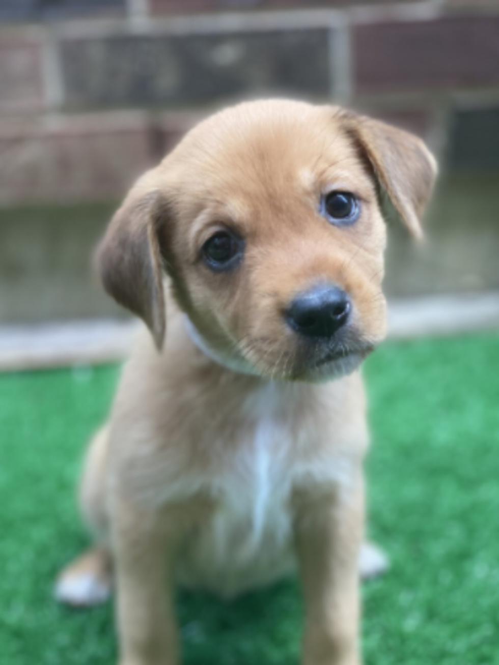 Ariana the puppy