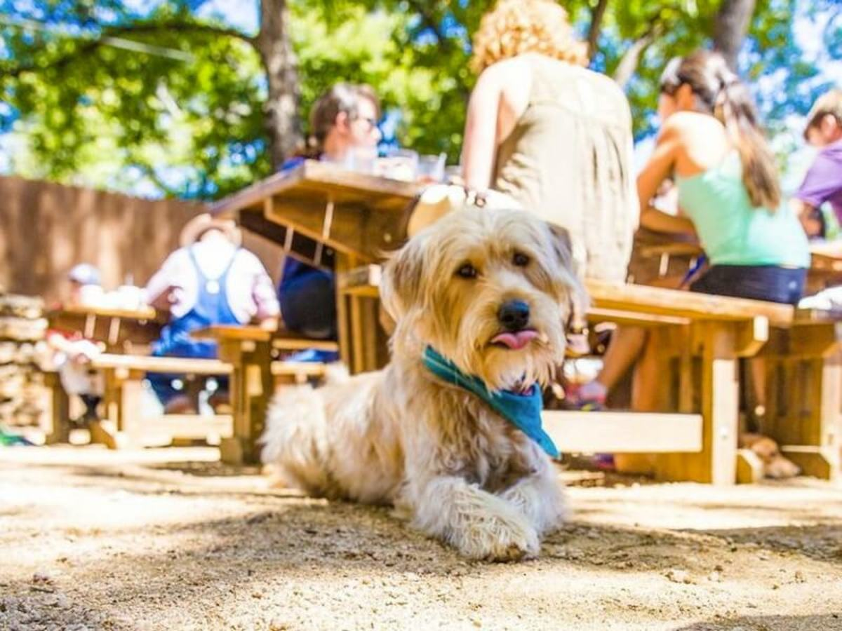 dog friendly places in austin