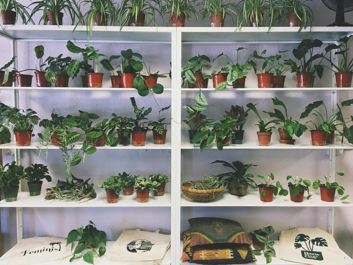 Our favorite Austin shops for hip and healthy houseplants