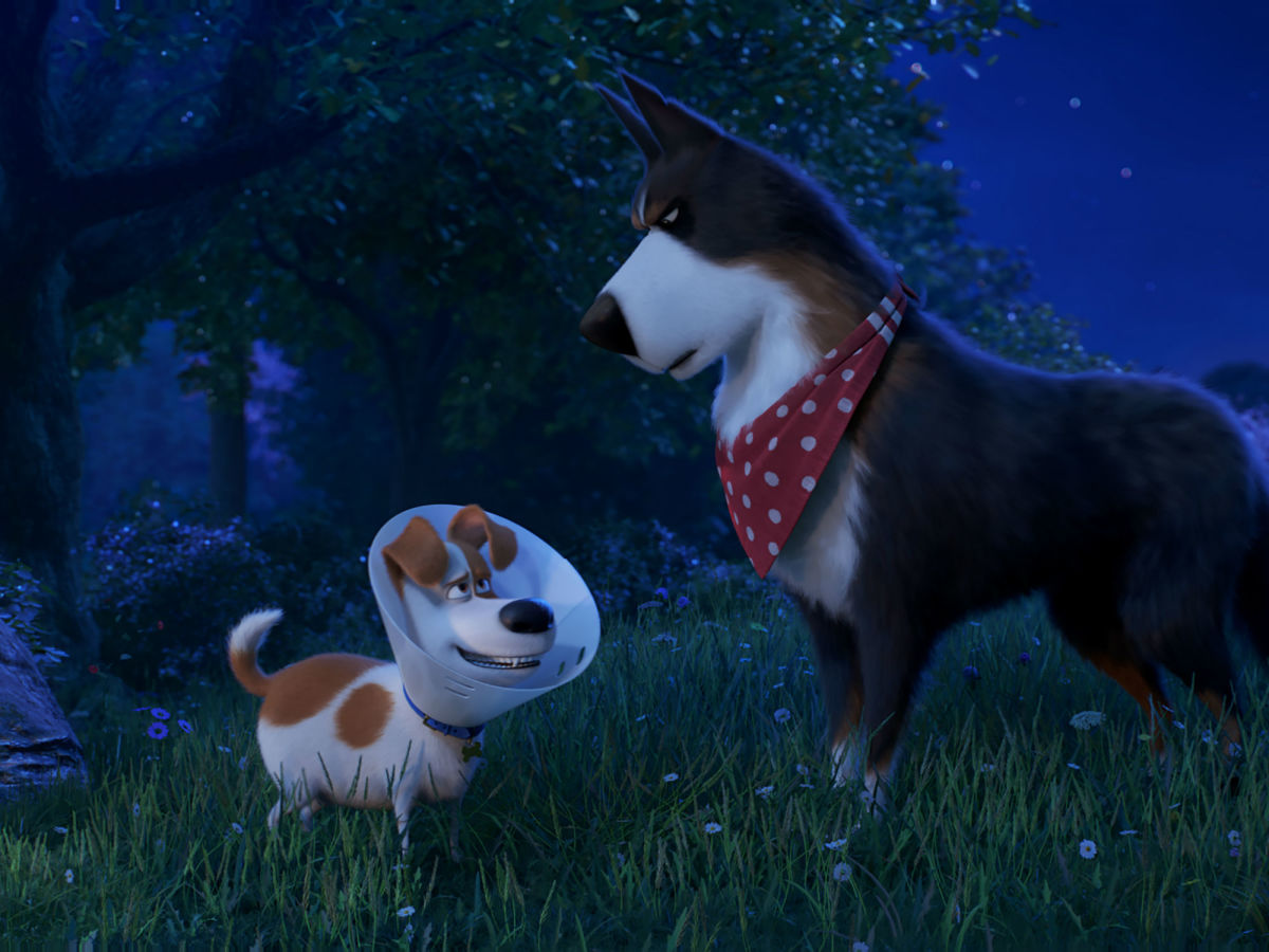 The Secret Life Of Pets 2 Trips Itself Up With Divided Focus