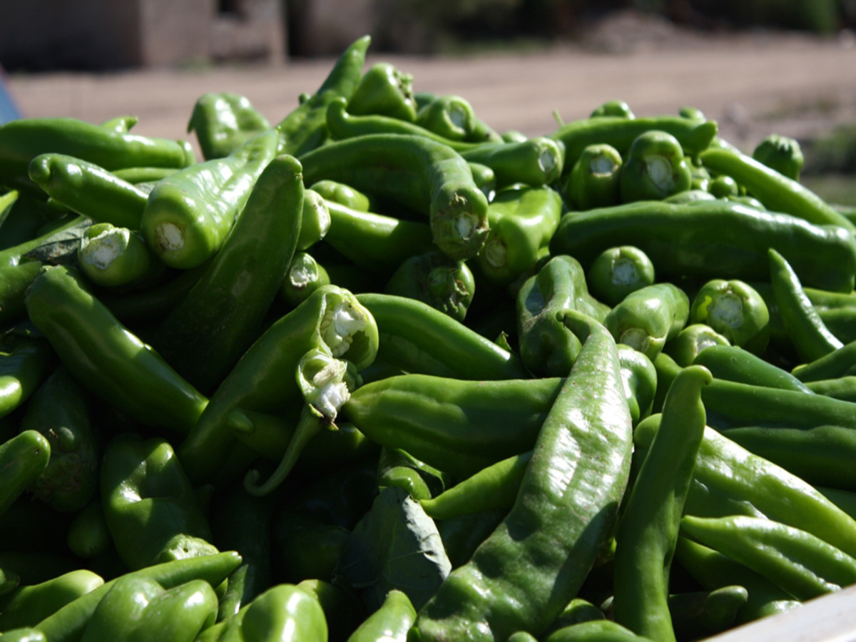 Hatch Chile Festival 2020.These Are The 8 Best Food And Drink Events In Dallas This