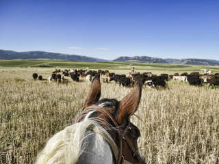 Bullock Texas State History Museum presents B Movies and Bad History: Cattle Drives