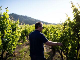 Italic vineyard