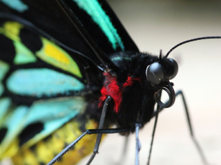 Texas Discovery Gardens presents Butterflies and Bugs Family Festival