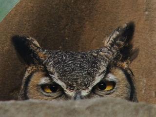 Lady Bird Johnson Wildflower Center presents Nature Nights