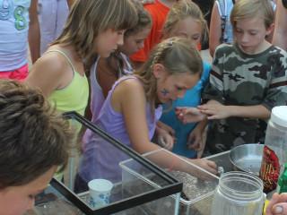 Little Herds Bug Festival Austin