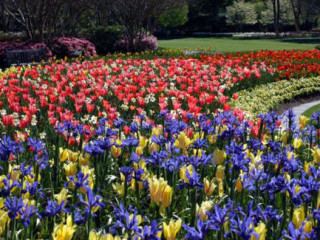 Dallas Arboretum And Botanical Garden Culturemap Dallas