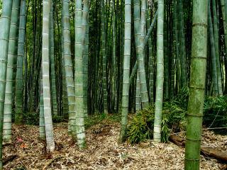 Texas Bamboo Society presents 24th Annual Texas Bamboo Festival