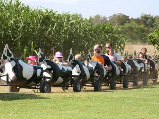 The Fall Festival & Corn Maze
