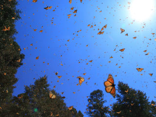 Lady Bird Johnson Wildflower Center presents Movies in the Wild: <i>Flight of the Butterflies</i>