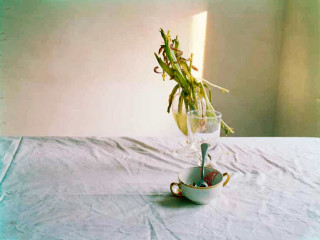 News_Nancy Wozny_FotoFest_Laura Letinsky_Ice Cream Dish_Tulip_from Hardly More Than Ever