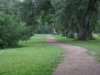 Brazos Bend State Park trees Texas grass