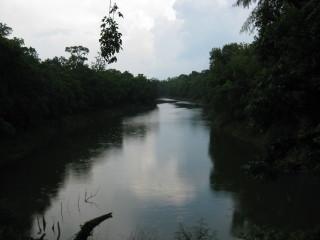 News_Peter Barnes_Brazos Bend State Park_river