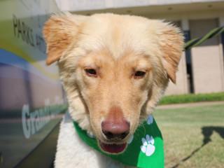 Scrappy Presents Dog Daze of Summer
