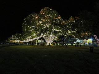 Tree Lighting & Santa's Workshop