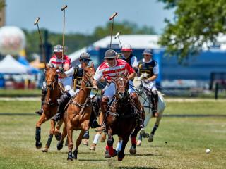 Military Horse Polo