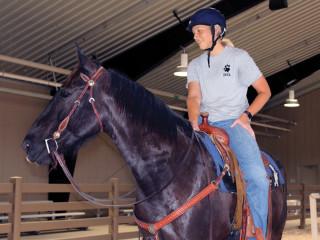 Houston Spca Presents Barn Open House Equine Meet Greet Event Culturemap Houston