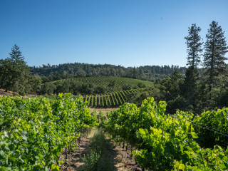 O'Shaughnessy Estate Winery Dinner