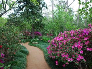 River Oaks Garden Club presents Azalea Trail