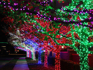 Merry & Bright Tour of Lights