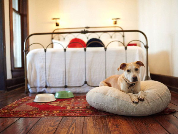 Hotel Havana dog-friendly accommodations