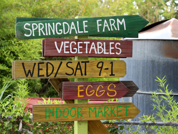 Sonya Cote Eden East at Springdale Farms in Austin 4133