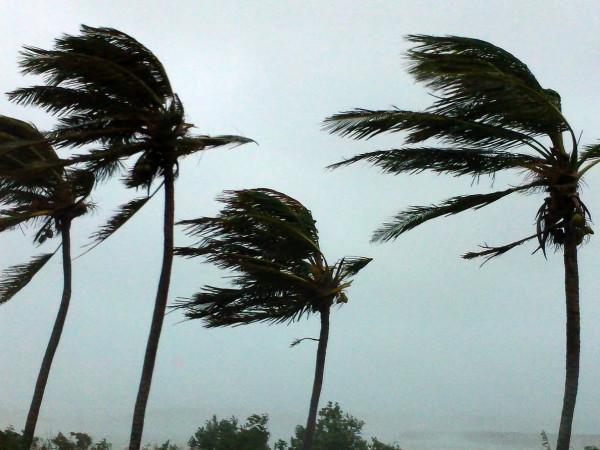 News_hurricane_palm trees_wind