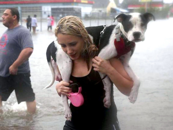 Houston, hurricane harvey, animal rescue