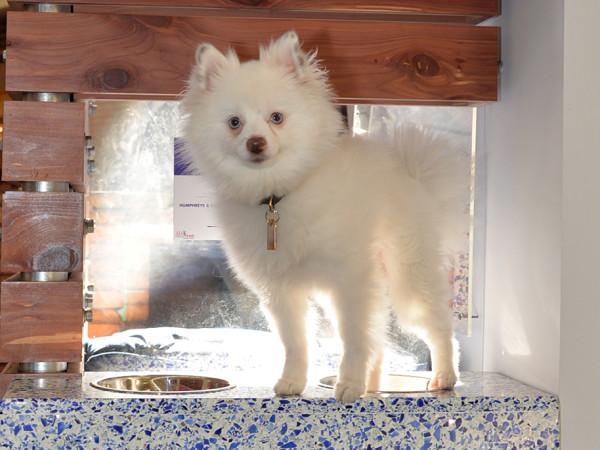 White fluffy dog SPCA