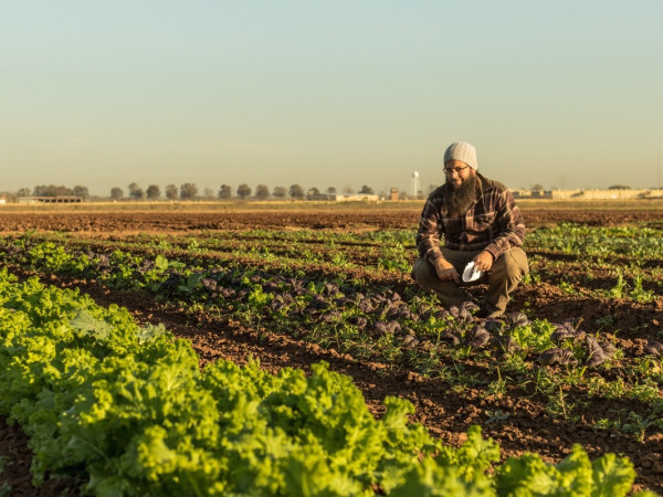 Scott Snodgrass Loam Agronomics