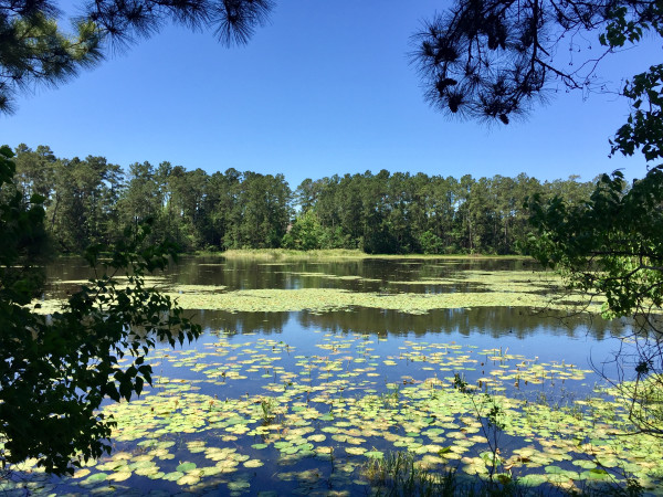 Woodlands Spring Creek Nature Trail