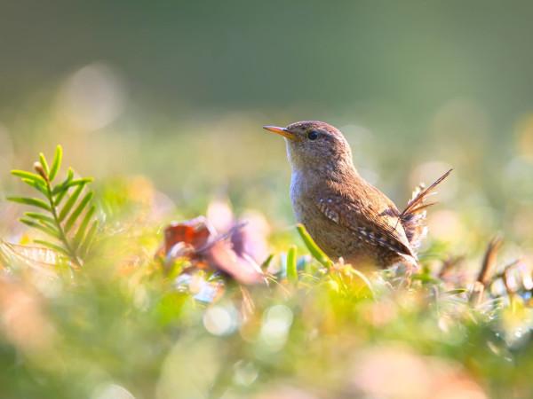 Birds of Memorial Park