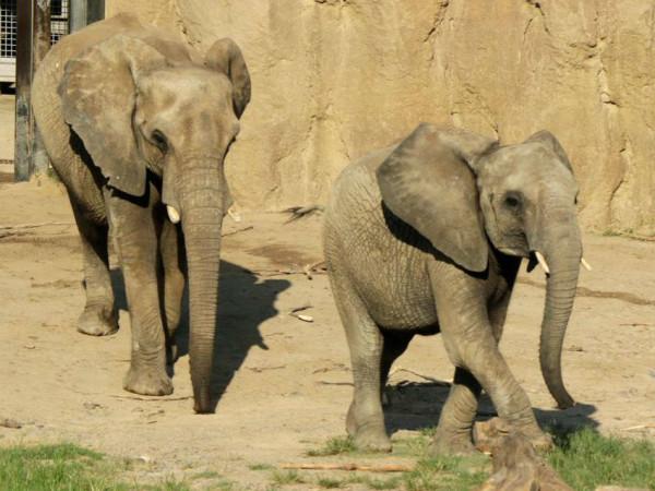 elephants Dallas Zoo