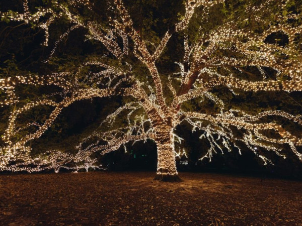 The Houstonian Hotel oak tree lights holiday