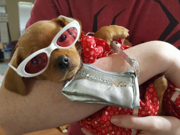 Houston puppy Puppy Bowl 15 Dawn Ken Hoffman