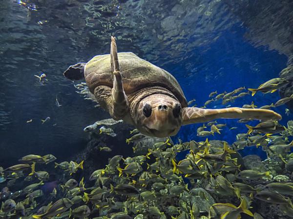 SeaWorld San Antonio Turtle Reef