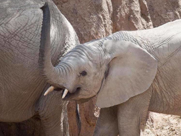 Dallas Zoo elephants