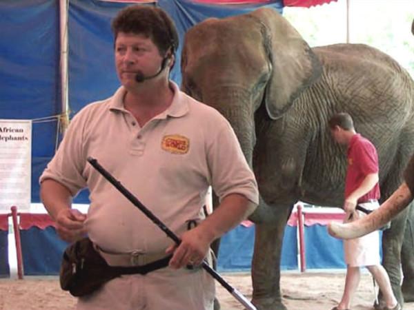 Doug Terranova elephant