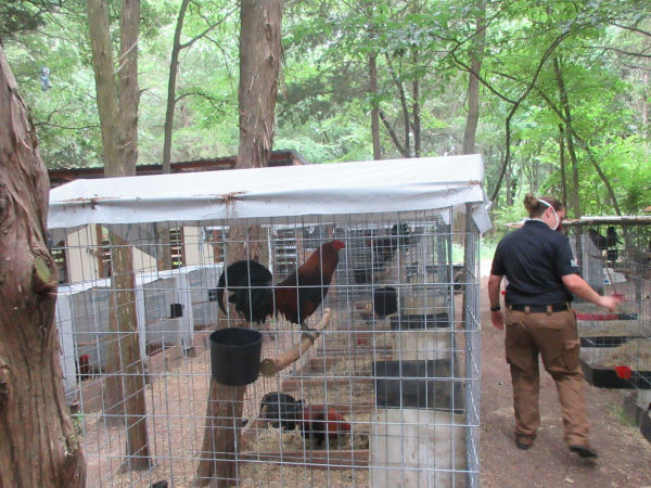 SPCA cockfighting southeast dallas
